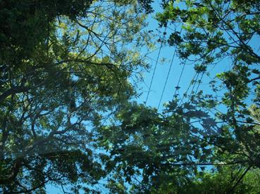 サンルーフから木立を見る
