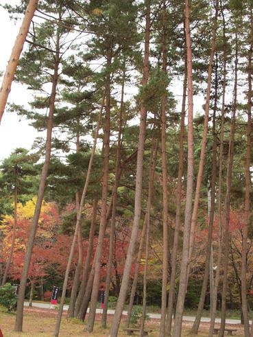 小淵沢、秋の訪れ