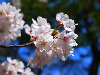 2012年春 千葉公園にて