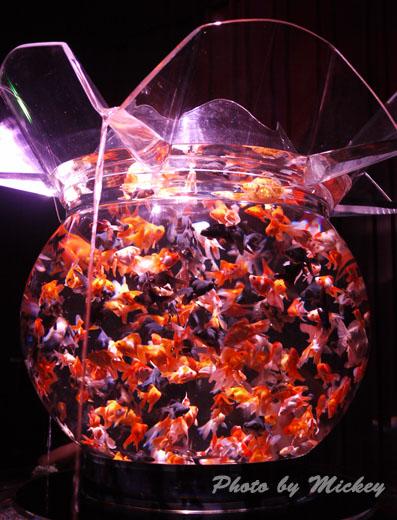巨大金魚鉢 花魁