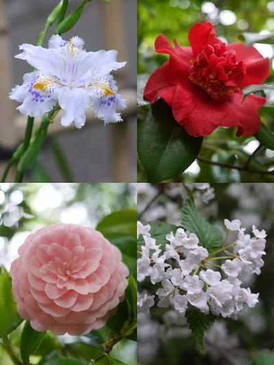 椿山荘の花たち