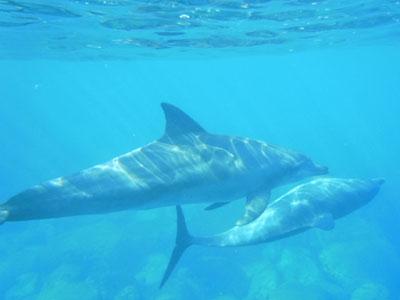 イルカの写真も撮れました