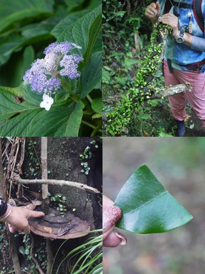 様々な植物