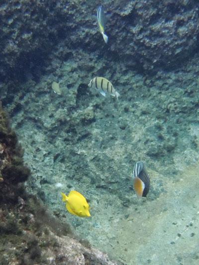 手軽に安全に、グアムの海を堪能