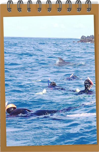 御蔵島で野生のイルカと泳いだこと