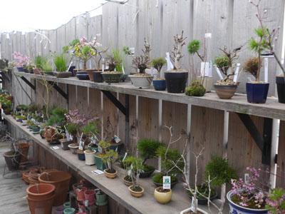 盆栽も売っています