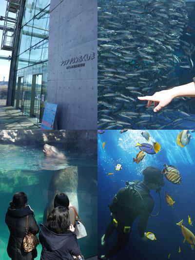 見て、触れて、学んで、感じられる水族館