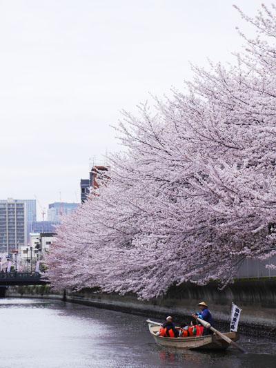 日本橋発着の桜周遊クルーズ
