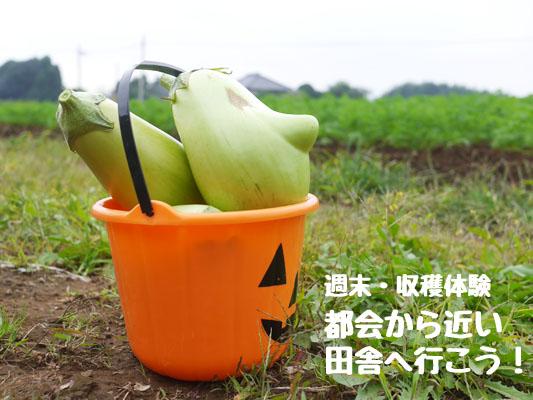 TABICA(たびか)で週末体験 千葉県・かつのりな農園で里芋収穫