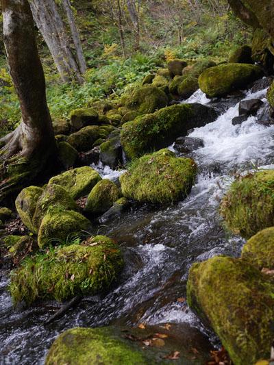 木谷沢渓流ってチャツボミゴケ公園を思い出させませんか?
