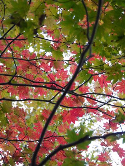奥大山に秋の訪れ