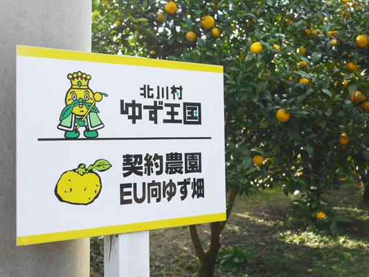 EUに出荷するほどの基準を誇る柚子