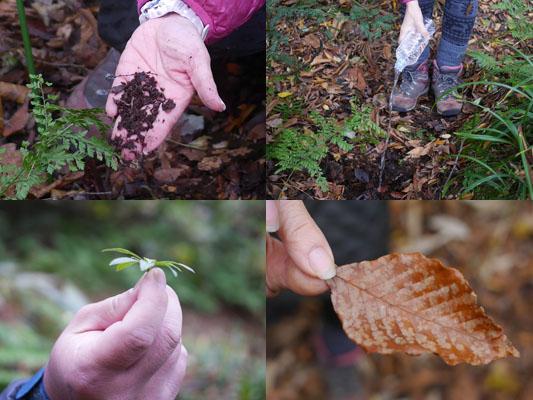 森で自然と触れ合う