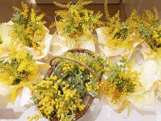 日本橋�島屋 日比谷花壇ではミモザが売られています
