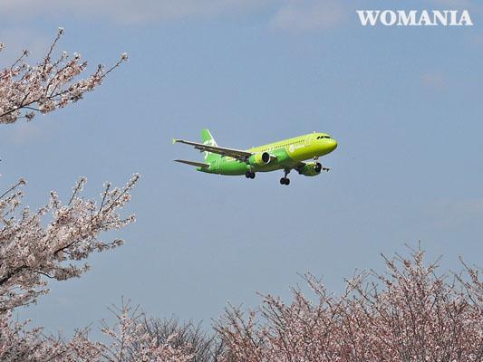飛行機撮影スポット 成田さくらの山公園 桜とS7