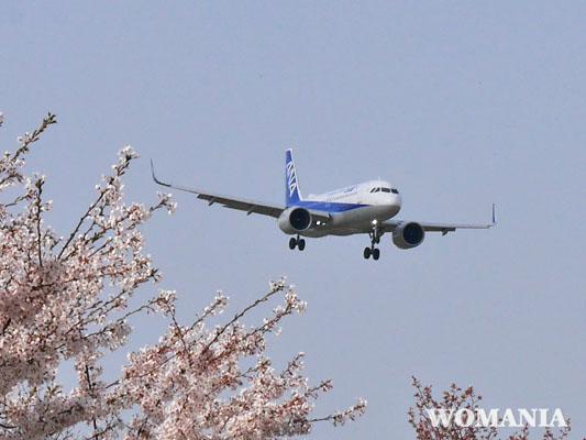 飛行機撮影スポット ANAと桜