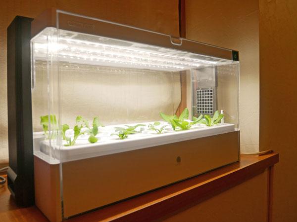 水耕栽培器 ユーイング グリーンファーム LED照明 明るさ